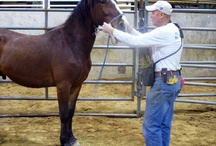 Horse - clicker and positive training