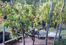 vineyards and domains at Le Vin des Alpes