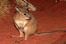 Australia Uluṟu-Kata Tjuṯa National Park