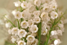 Lily of the Valley ~ My Favorite Flower / by Remember Me Emily