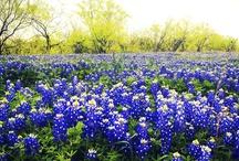 Exploring Dallas / Places to see in Dallas