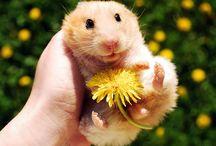Cute Animals / by Kirbie {Kirbie's Cravings}