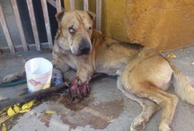 ANIMAL ABUSE - please help stop it!!! / by Molli Adams