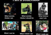 Dobies<3