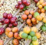 Cafea Prajita / http://www.clarocafe.ro/categorie-produs/cafea-prajita