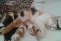 """Our Cat """"Sansone"""" / Our cat delivered three babies on July 27, 2015"""