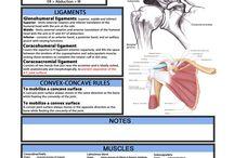 Radiologia fisioterapia