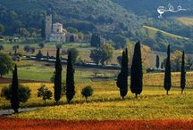 Tuscany / Franco's wine Tours in Tuscany