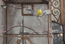 gabbie uccellini