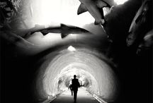sharks. / by ju.