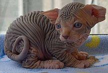 Meowww!!!
