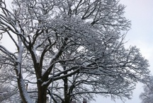 Snowy Moffat