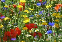 Emma's Seed garden