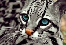 Lovely Pets / The tips and images of pets which are very lovely!