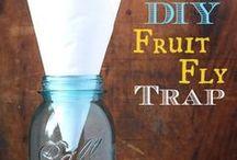 Household hints / Fruit flies