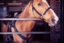 Inside the Stables / Meet the stars of our show, our horses!