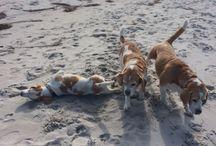 Ohnmächtig am Strand