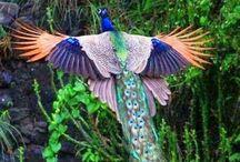 Nature birds