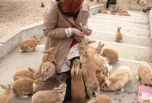 The bunny Island / I wanna go there so bad ..