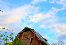 Beautiful Barns:) / by Janie Hansard