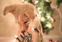 Christmas time! / by Adriana RSC