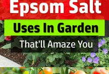 Epsom salts on garden