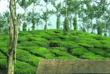 5 Days Kerala Honeymoon package for Rs 12,500. / http://travelgowell.in/kerala-honeymoon/5-days-kerala-honeymoon-packages/munnar-thekkedy-alappy.html.5 Days Kerala Honeymoon package for Rs 12,500.covering Munnar ,Thekkady and Alappy.