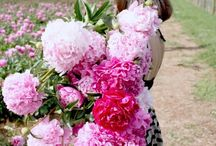 Flowers / hydrangeas, roses, gardens, gardening tips, landscaping, peonies, pink peonies, bouquets, wedding bouquets