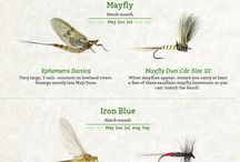 Flies and their patterns