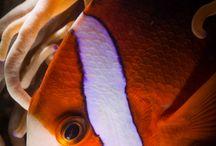 Underwater World with dentiko / Подводный мир. Взгляд из глубины. Покорители  водных просторов -дайверы , фридайверы , окружающие их   морские животные , рыбы , моллюски, ракообразные, затонувшие корабли и обьекты.. Здесь ..Фотографии сделанные   под водой  в различных уголках мира...