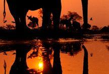 Crazy about Elephants