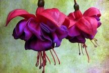 Gorgeous Flowers / by Jennifer Carter