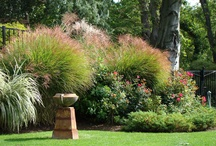 Landscaping and gardening / Landscaping and gardening pictures
