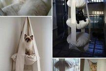 Kediler için