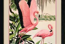 πινακες πουλια