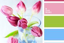 Flowers.Tulips