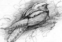 Drawing/sketching