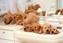 Cute Puppies / The world's lovable puppies