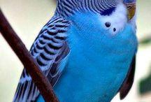 Güzel kuşlar