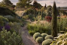 Dry Garden Ideas