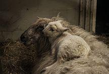 Down On The Farm / Farm Animals / by Rhonda Tornow