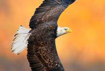 Αετός 2