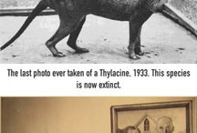 Old & Historical Photographs