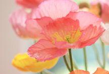 Flowers that speak