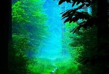 nature' scene