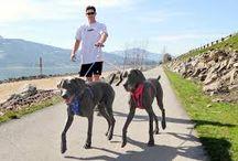 Dog Behavior Training Very Easily
