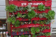 Növények,kertek