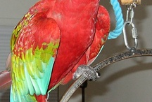 Parrots / All Things Zygodactyl! / by Coffee Parrot Coffee