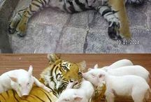 Animals / Funny & cute things about animals. They are so adorable and funny!