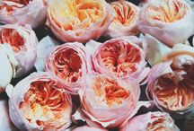 mfs florist